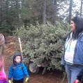 Christmas Tree Cutting 2014
