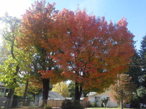 Autumn colors can remind us of the fire of God's Spirit in us!